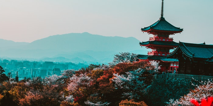 How to start a business in Japan – beginners guide